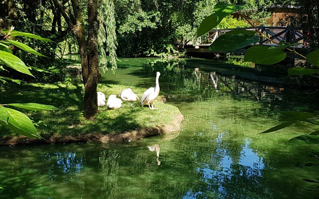 Obisk živalskega vrta in pohod